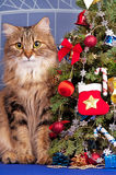 вектор елевого символа рождества традиционный Стоковое Изображение