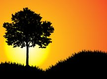 вектор захода солнца Стоковое Фото