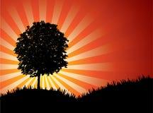 вектор захода солнца Стоковая Фотография