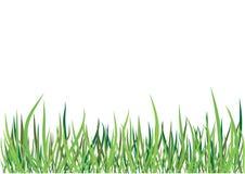 вектор зеленого цвета травы Стоковые Фото