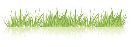 вектор зеленого цвета травы Стоковое Изображение RF