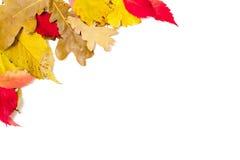 вектор изображения иллюстрации элемента конструкции Угловая рамка упаденных листьев Стоковое Изображение RF
