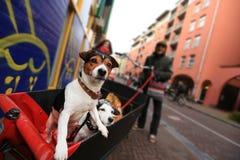 вектор изображения потехи собаки стоковое изображение