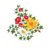 вектор изображения цветка букета яркий флористическая рамка обрамляет серию Поздравительная открытка эффектной демонстрации Стоковое Изображение