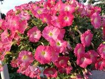 вектор изображения цветка букета яркий стоковые фотографии rf