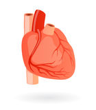 вектор изолированный сердцем Стоковое Изображение RF