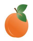 вектор иллюстрации абрикоса Стоковые Изображения