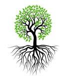 Вектор иллюстрации дерева и корня стоковые фото