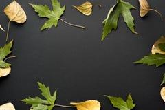 вектор иллюстрации предпосылки осени красивейший Стоковые Фотографии RF