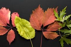 вектор иллюстрации предпосылки осени красивейший Стоковое фото RF