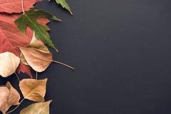 вектор иллюстрации предпосылки осени красивейший Стоковое Изображение RF