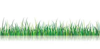 вектор иллюстрации травы Стоковое фото RF