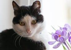 вектор иллюстрации 10 цветков eps кота Стоковая Фотография RF