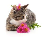 вектор иллюстрации 10 цветков eps кота Стоковые Фотографии RF