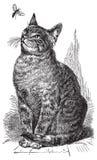 вектор иллюстрации чертежа кота Стоковое Изображение