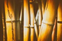 вектор иллюстрации eps 10 предпосылок bamboo Природа и предпосылка заводов Стоковые Фотографии RF