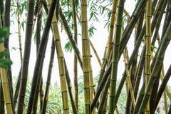 вектор иллюстрации eps 10 предпосылок bamboo Стоковые Фото
