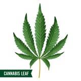 Вектор лист марихуаны Зеленая конопля пеньки Sativa или лист марихуаны конопли Indica изолированные на белой предпосылке иллюстрация штока