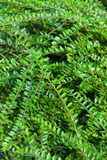 вектор иллюстрации листва предпосылки красивейший Стоковые Изображения RF
