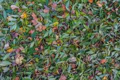 вектор иллюстрации листва предпосылки красивейший Стоковое Изображение
