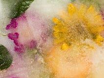 вектор иллюстрации конструкции абстракции флористический Стоковая Фотография RF
