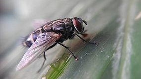 вектор иллюстрации мухы Стоковые Фото