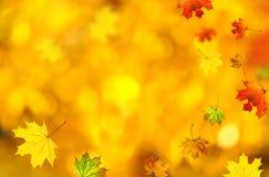 вектор иллюстрации предпосылки осени красивейший Стоковая Фотография RF