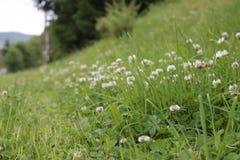 вектор иллюстрации травы цветков Стоковое Изображение RF