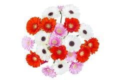вектор иллюстрации цветков букета флористический Стоковое Изображение RF