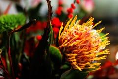 вектор иллюстрации цветков букета флористический Стоковая Фотография