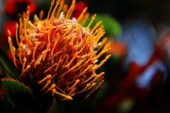 вектор иллюстрации цветков букета флористический Стоковое фото RF