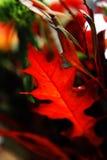 вектор иллюстрации цветков букета флористический Стоковая Фотография RF