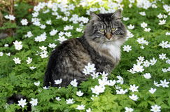 вектор иллюстрации 10 цветков eps кота Стоковое Фото