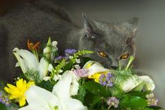 вектор иллюстрации 10 цветков eps кота Стоковые Изображения RF