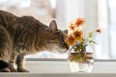вектор иллюстрации 10 цветков eps кота Стоковое фото RF