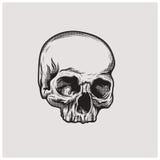 Вектор иллюстрации черепа Стоковое Изображение