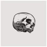 Вектор иллюстрации черепа Стоковое Изображение RF