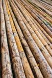 вектор иллюстрации eps 10 предпосылок bamboo Стоковая Фотография RF