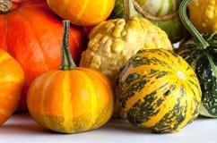 вектор иллюстрации halloween установленный тыквами зеленый померанцовый желтый цвет Стоковая Фотография