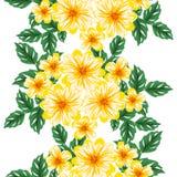 вектор картины цветка безшовный Стоковое Изображение