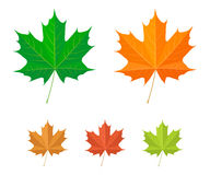 вектор клена листьев икон Стоковые Изображения