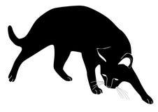 Вектор кота Стоковое фото RF