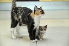 вектор котенка иллюстрации кота стоковое изображение rf