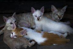 вектор котенка иллюстрации кота Стоковые Изображения RF