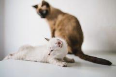 вектор котенка иллюстрации кота стоковые фотографии rf