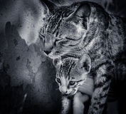 вектор котенка иллюстрации кота Стоковое фото RF