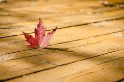вектор красного цвета клена листьев графиков Стоковая Фотография RF
