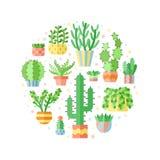 Вектор круга плоского стиля Succulents и кактусов пестротканый Стоковые Изображения