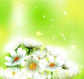 вектор лета весны Стоковые Фото