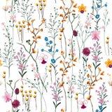 Вектор лета много вид красивого полевых цветков безшовное на wh иллюстрация вектора